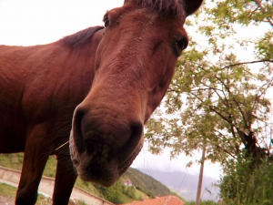 sick-horse-1424916-m